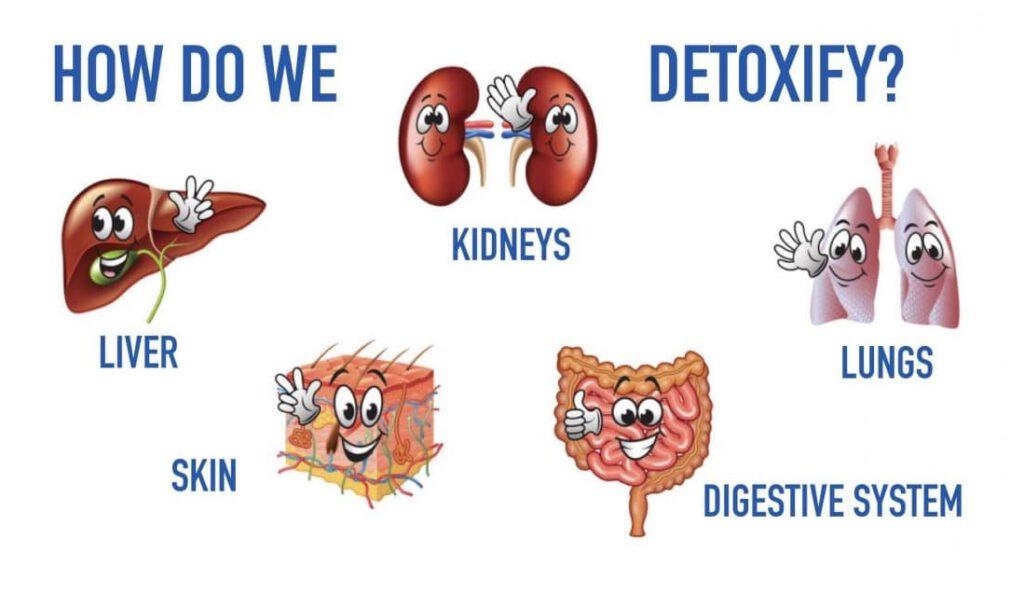 how to detoxify kidney?