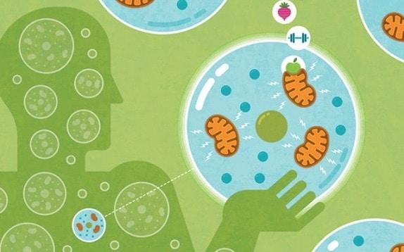 where Mitochondria is found?