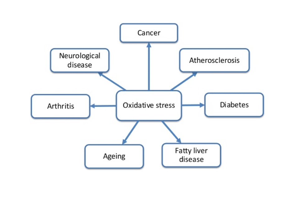Oxidative-Stress