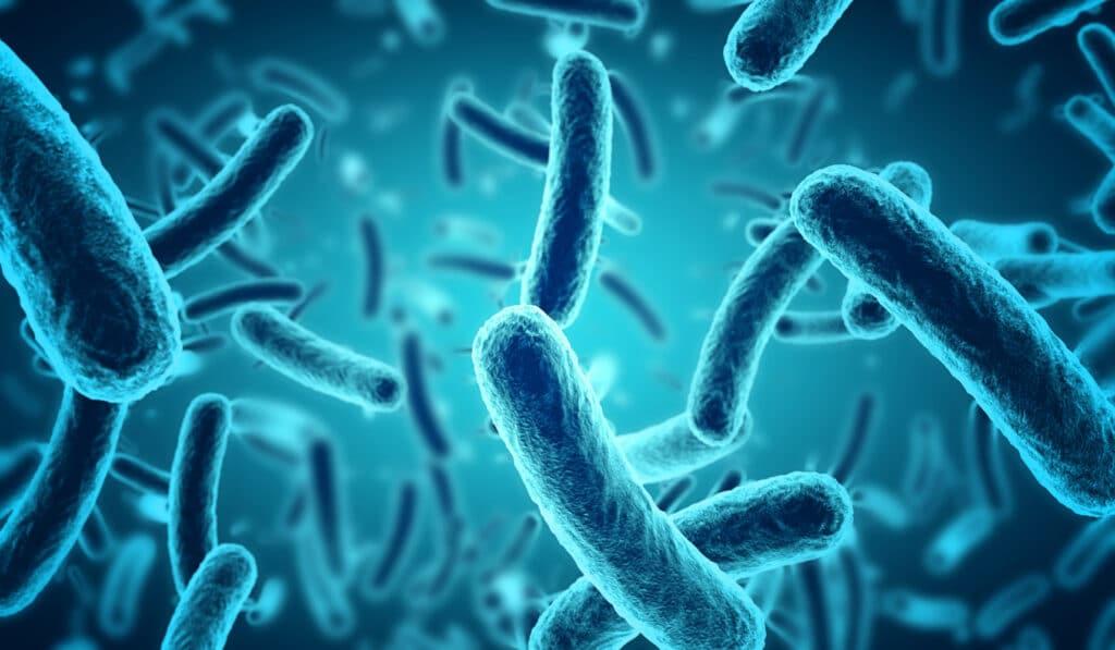 microscopic bacteria